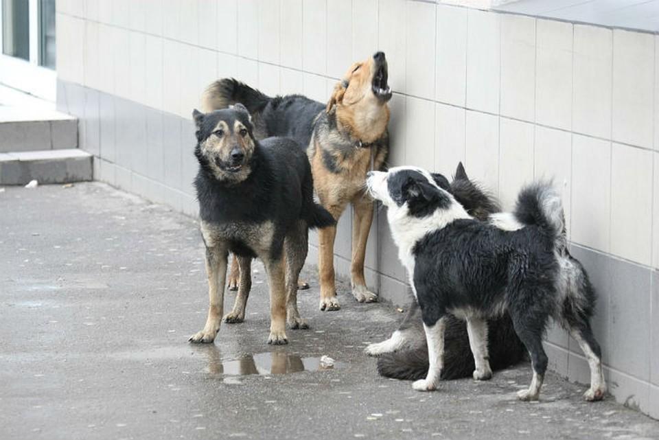 Куда жаловаться, если во дворе поселилась свора бездомных собак