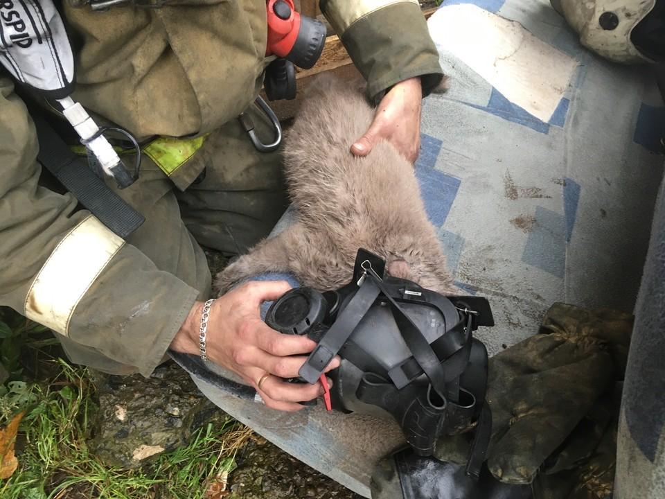 Кошку нашли лежащей на полу без сознания. Фото Алексея Седышева