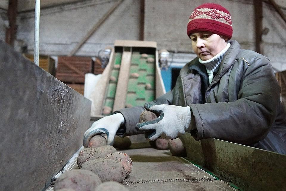 Работницы села теперь смогут трудиться на 4 часа в неделю меньше горожанок.