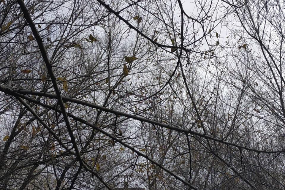 Погода в Хабаровске на 29 октября 2019 года: днем до +9, дождь