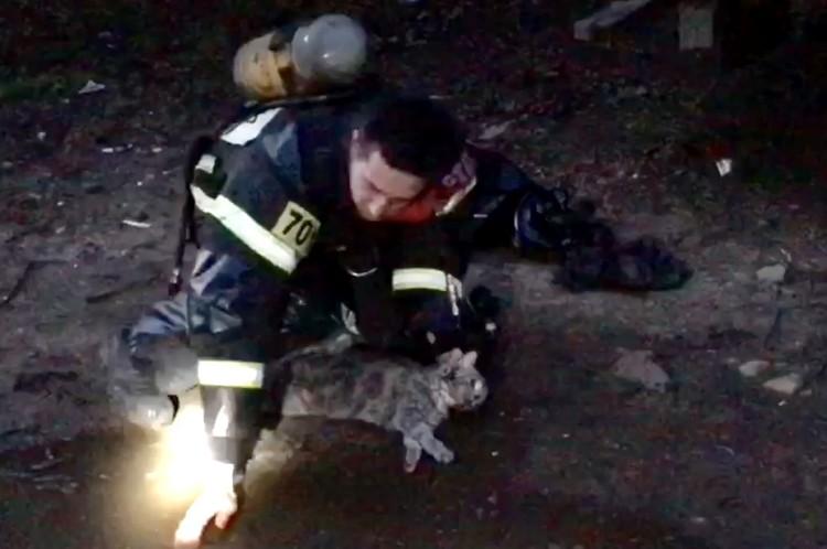 Реанимация кота длилась около семи минут и завершилась успешно. Фото: кадр с видео ГУ МЧС по Тверской области