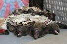 В Коми за добытого волка или медведя охотникам заплатят по 20 тысяч рублей