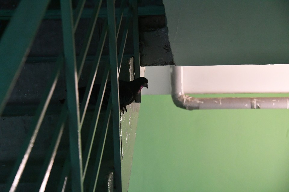 Девочка больше суток пряталась в подъезде многоэтажки
