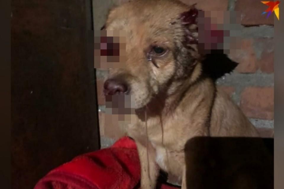 Кто изуродовал собаку - неизвестно