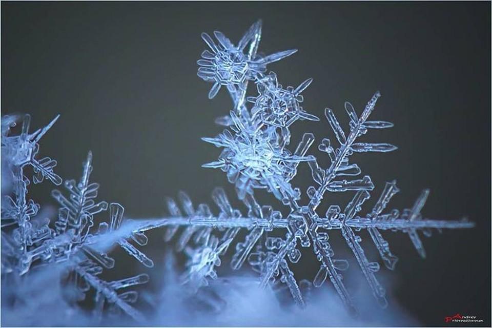 Волшебные снежинки фотограф из Новосибирска снимает уже более шести лет. Фото: andreypristyazhnyuk