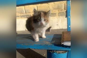 «Услышала мяуканье из-под земли!» Пенсионерка отрыла новорожденных котят, которых живьём закопали хозяева