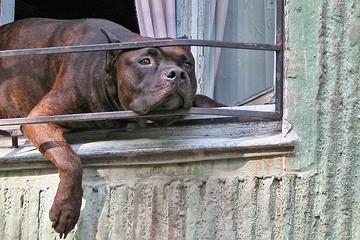Не жестокий ли закон о жестоком обращении с животными
