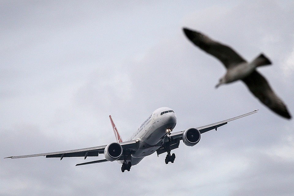 Росавиация фиксирует более тысячи попаданий птиц в самолеты ежегодно. Фото: GLOBAL LOOK PRESS