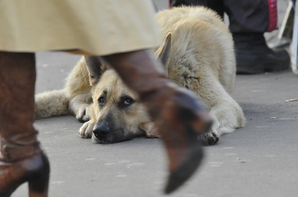 Бездомных животных начнут стерилизовать в Хабаровске