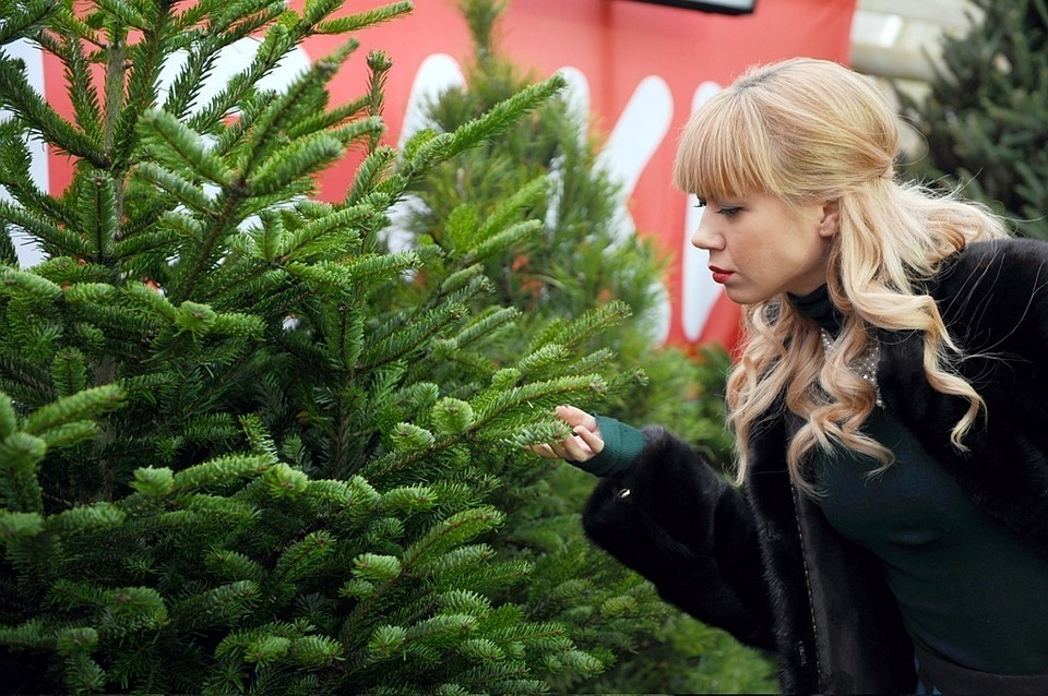 Психолог советует украсить елочку ближе к 31 декабря.