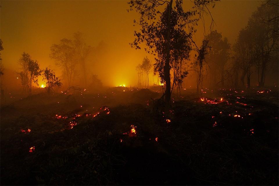 Последствия лесного пожара в Индонезии.
