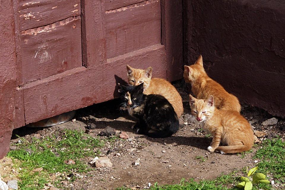 Дворовые кошки - потенциальные переносчики всех заболеваний. Чумы, чесотки, чего хотите