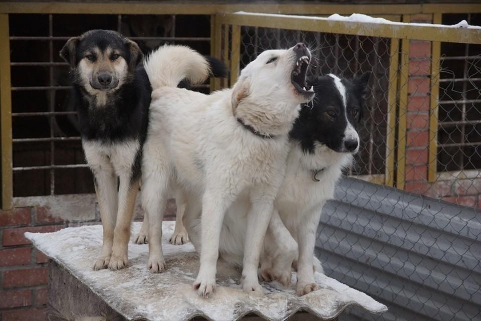 Следователи тоже решили проверить бездомных собак в Березовском