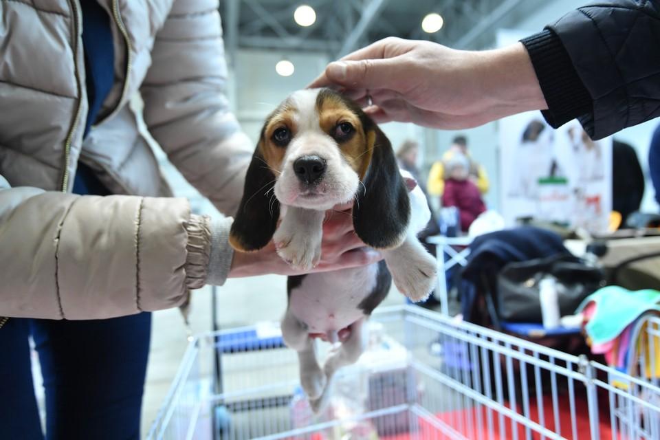 Перед покупкой внимательно изучите ветпаспорт животного.