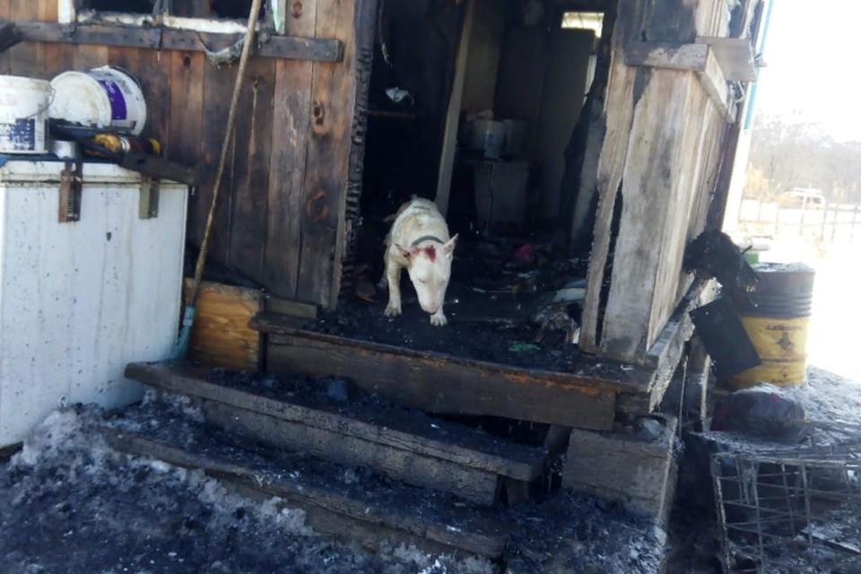 Женщина не находит себе места и считает, что собаки спасли ей жизнь, а она их уберечь так и не смогла.