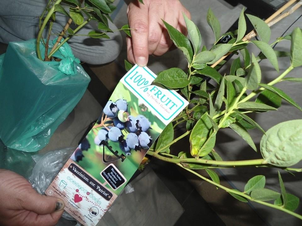 Растения с землей без сертификата запрещены к перевозке через границу.