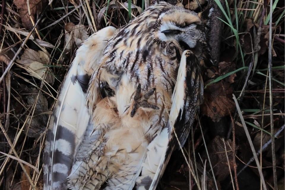 Перед смертью у представителей местной фауны происходило внутренне кровотечение. Фото: Юлия Колесникова.