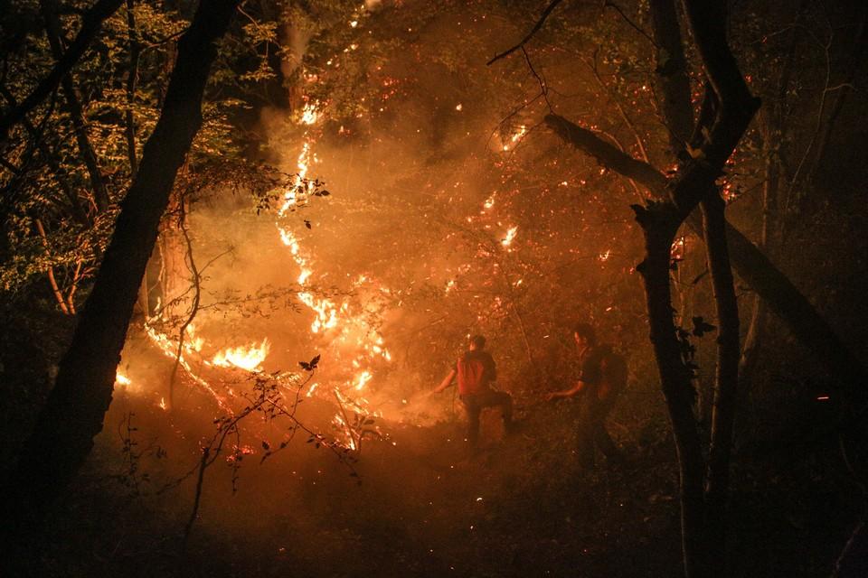 Петербуржец, живущий в Австралии, рассказал о борьбе с лесными пожарами