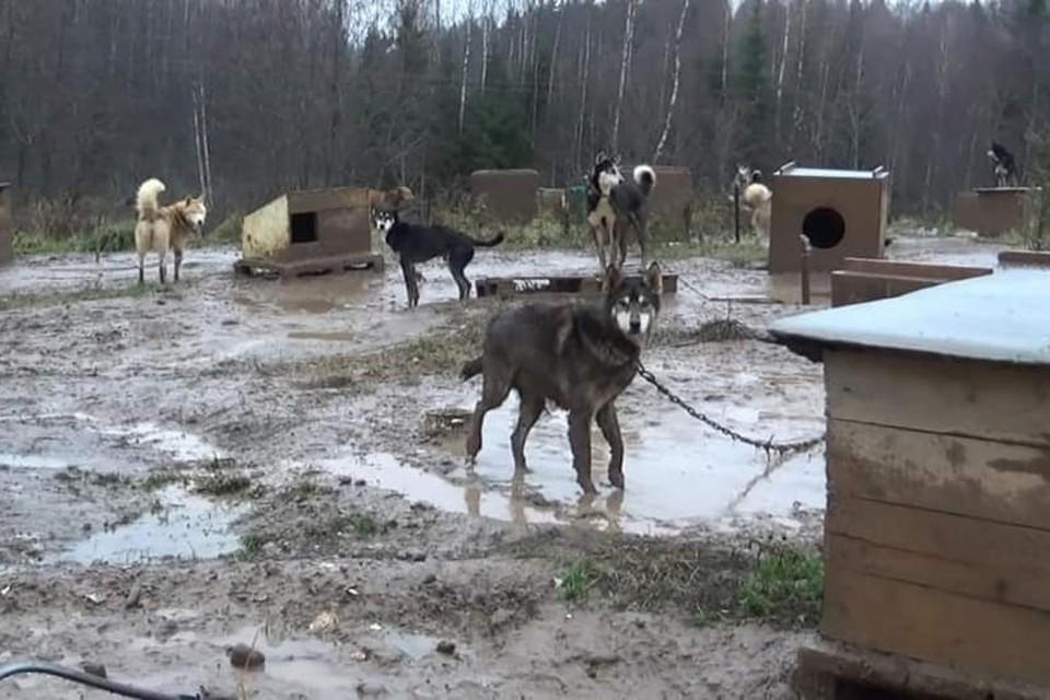 На фотографии собак породы хаски, которые были сделаны несколько дней назад в Измайловском парке без слез не взглянешь.