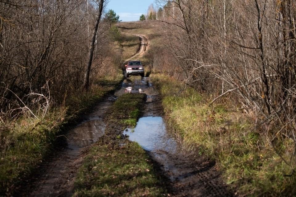 еплая зима на северо-западе России повлияла не только на быт человека, но и может серьезно изменить жизнь обитателей леса