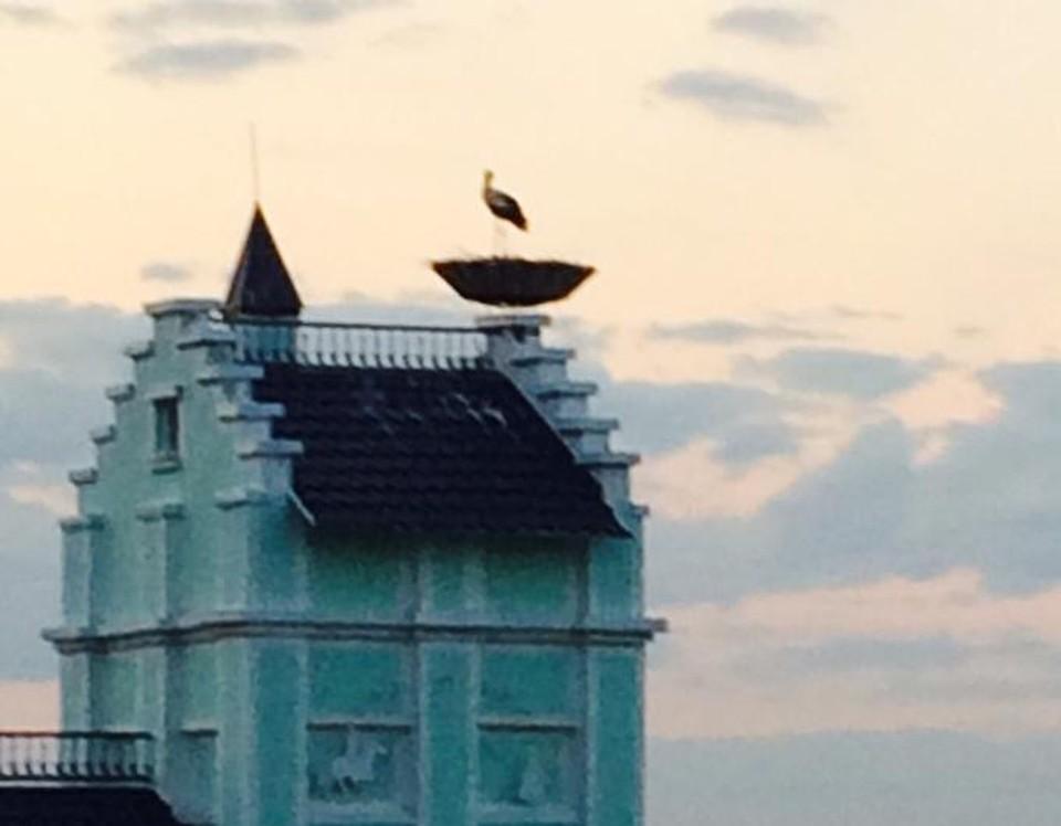 Три года назад на гнездо, сооруженное на крыше частного дома в селе Кораблино, прилетел аист. Так появилась мечта! Фото: Андрей ОРИШКЕВИЧ