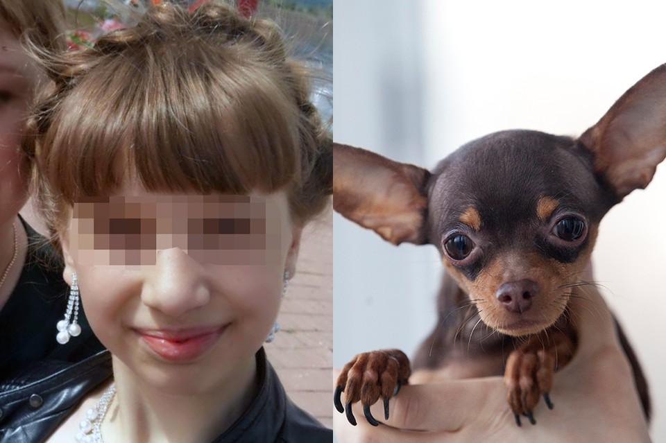 В Якутии той-терьер бросился на гигантского пса, спасая 11-летнюю хозяйку. Фото: соцсети.