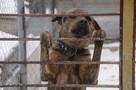 Более 3,8 тысячи бродячих собак отловят в Приморье