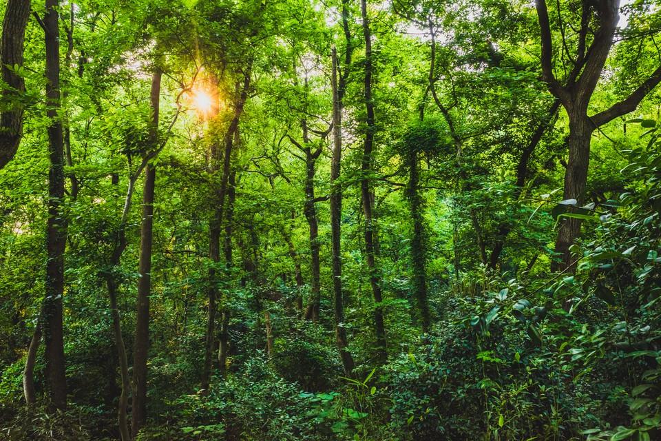 """""""Никольская лесная дача"""" является образцом научного лесоводства с XVIII века. Фото: shutterstock.com"""