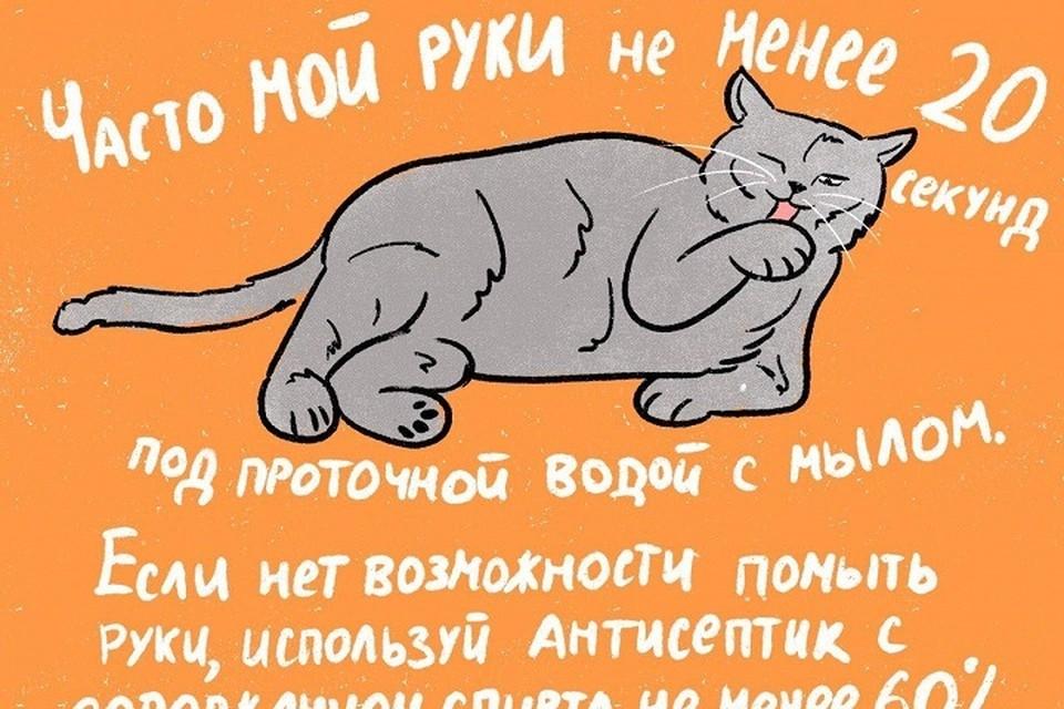 Котики рассказали, как пережить пандемию коронавируса / Фото: ИТМО