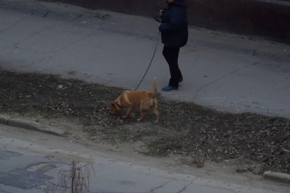 В режиме всеобщей изоляции разрешено выгуливать домашних животных