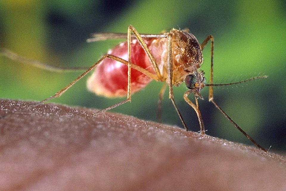 Ученые рассказали, могут ли комары и мухи быть переносчиками коронавируса