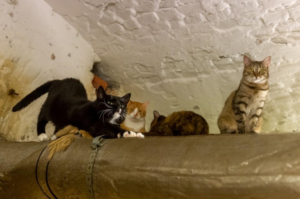 Эрмитаж показал, как живут музейные коты во время режима самоизоляции
