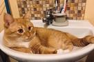 «Увидел бы сразу его настоящее фото – никогда бы не взял!»: Нижегородский кот Рыжий стал звездой Первого канала