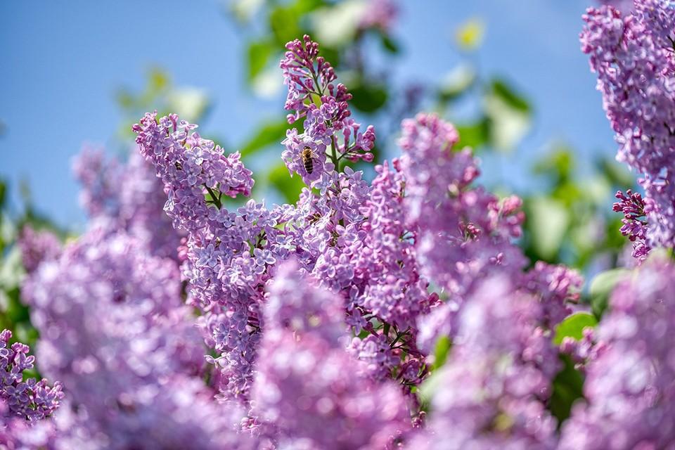 В конце мая может наступить резкое похолодание. Фото: pixabay.com