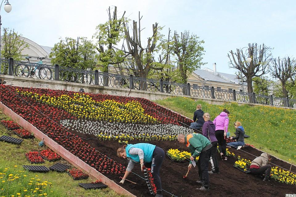 Цветник в форме герба города украсил набережную Степана Разина Фото: администрация Твери
