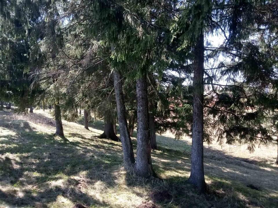 Девочек нашли в лесу в 10 км от приюта.