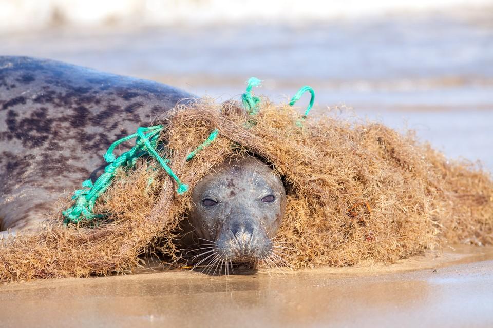 По мнению экологов, первоочередной задачей человечества в настоящее время является сохранение вымирающих видов. Фото: shutterstock.com.