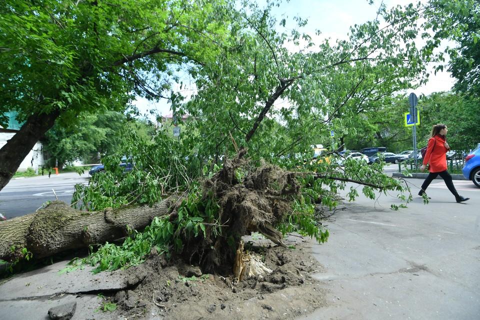 Во время шторма и ливня в Москве повалило 10 деревьев