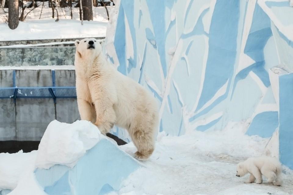 После выхода из карантина Новосибирский зоопарк изменил цены на билеты.