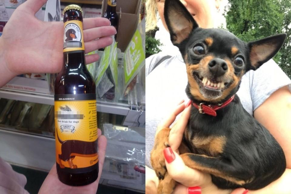 На полках новосибирских зоомагазинов появилось весьма необычное лакомство: пиво для собак. Фото: Алена КУЛЕШОВА\Елена КАРПОВА