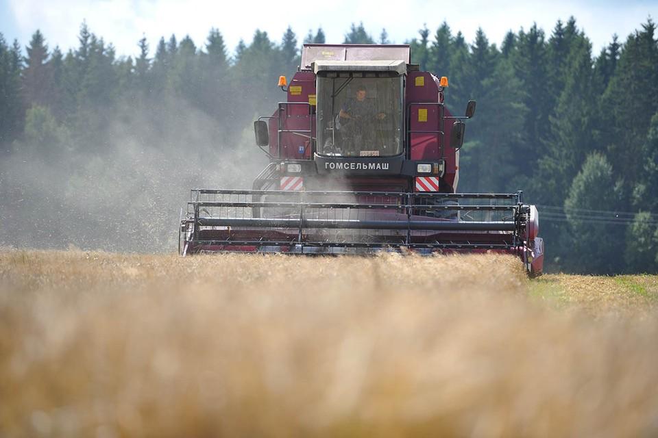 Вся Белоруссия работает, безработицы в ней - 0.2%. Так что кормят белорусы себя сами.
