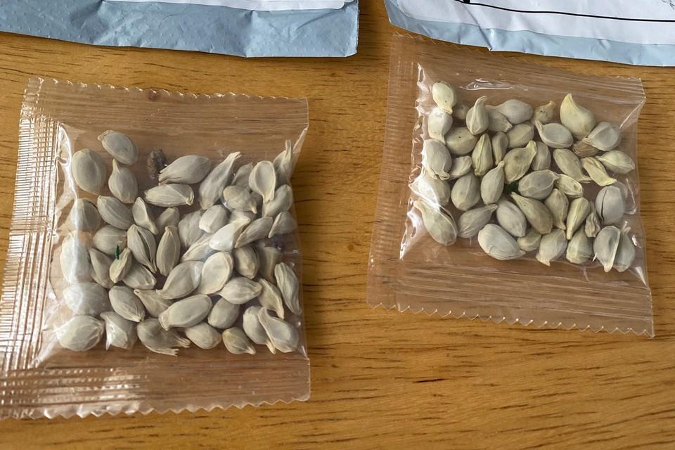 В Минсельхозе США сообщают - на семенах есть неизвестное покрытие