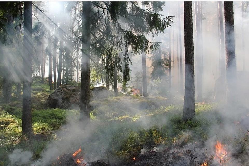 В Югре действует 14 лесных пожаров Фото: pixabay.com