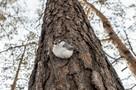 Ученые пытаются разгадать тайну массового самоубийства птиц в Новосибирске: разбираем все версии