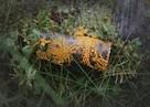 Ради еды готов на многое: В Ленобласти появились живые грибоподобные существа