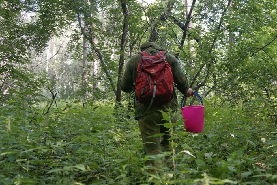 Потеряться в лесу может каждый.