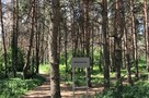 В Северном лесу Воронежа посадят почти девять тысяч новых деревьев