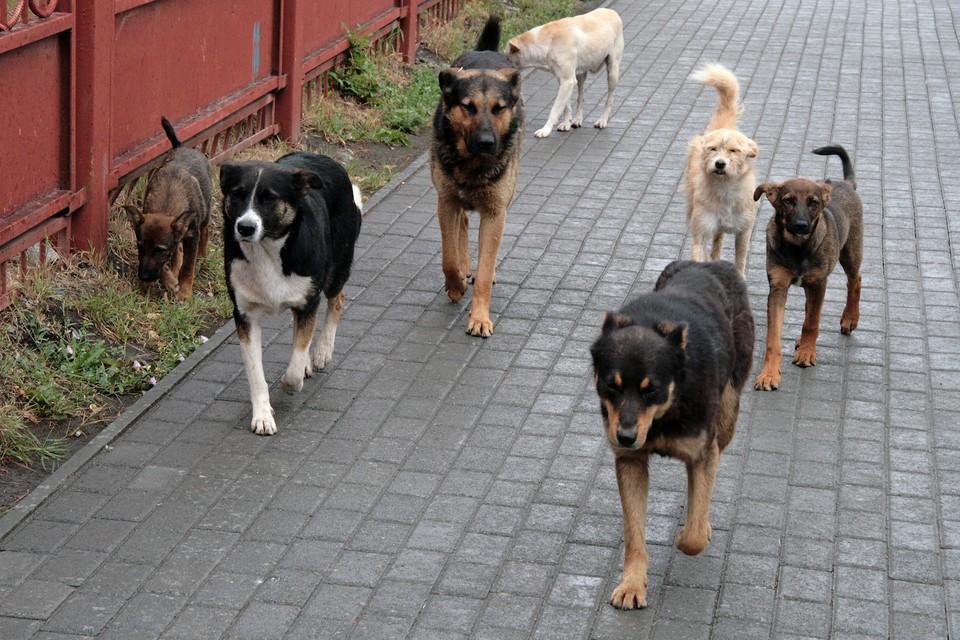 Бездомные собаки всю зиму нападали на детей и взрослых в разных районах Тольятти
