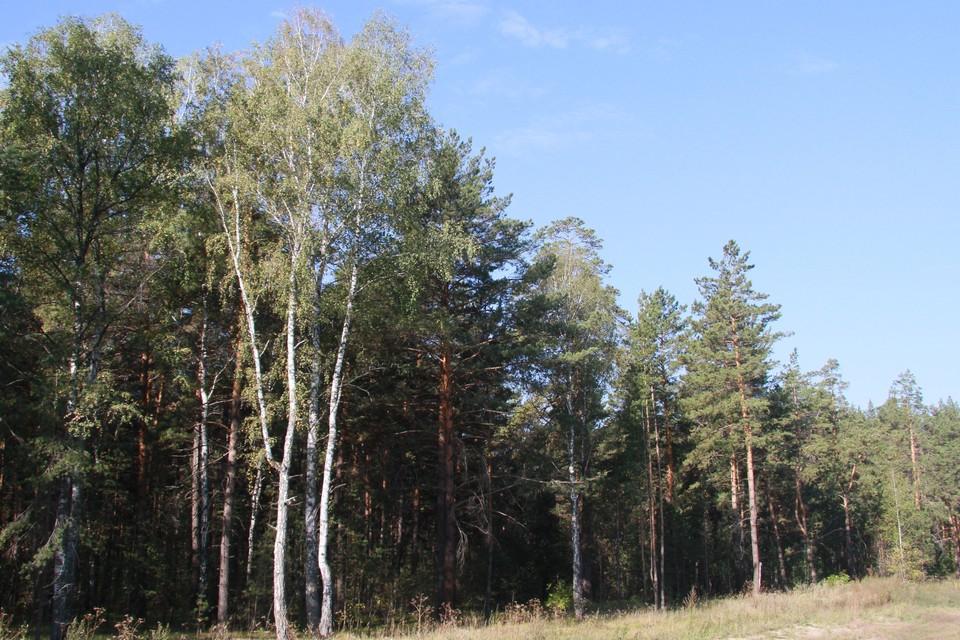 Спасатели и полицейские несколько раз участвовали в поисках грибников, потерявшихся в лесу.