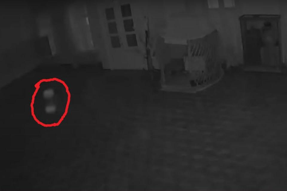"""Вот это белое пятнышко """"мечется"""" по залу. Фото: скриншот видео."""